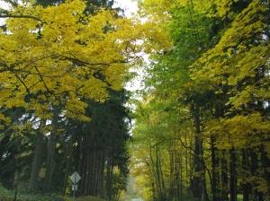 fall 09 087