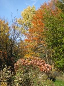 fall 09 111