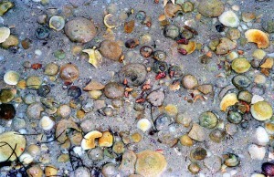 Flowers a few pebbles for the mary oliver poem about blue iris