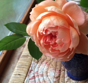 Kristi last rose of summer try 2 2013