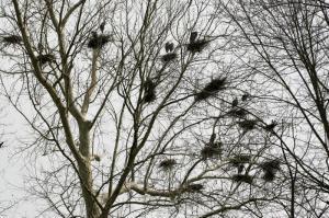 Birds gbh spring 2014 nesting on bath road