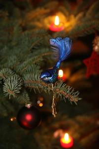 Emily dec 2014 Christmas tree blue bird I bought for Sofia Splendid Fairy something bird from bird bingo