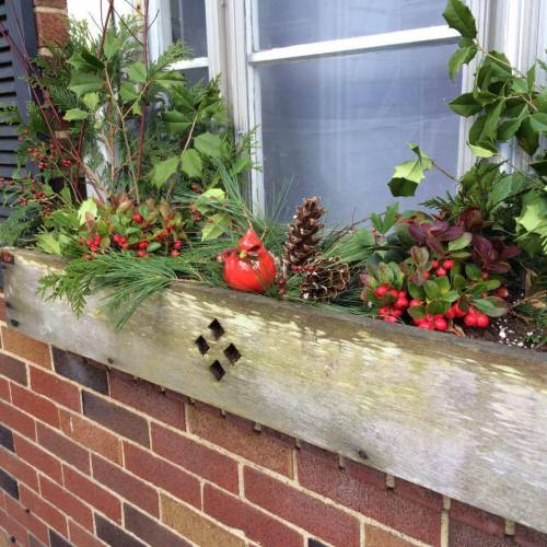 Alice nov 2015 window box thanksgiving