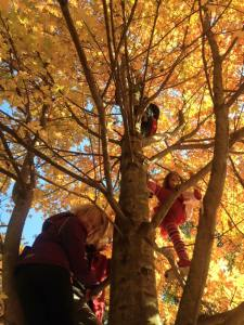 Sofia oct 2015 climbing trees