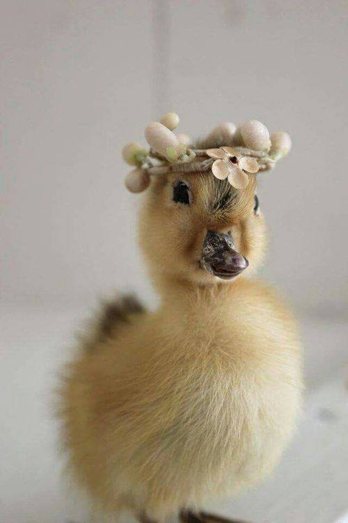 birds-duckling-princess