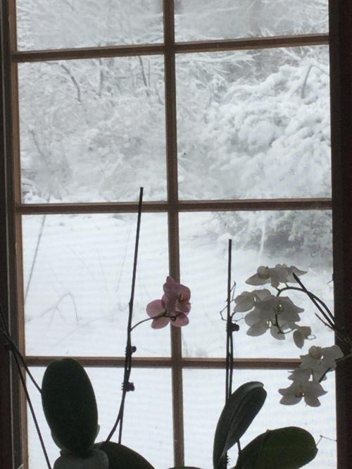 blog mar 2019 mar 31 more snow