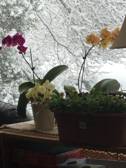 blog mar 2019 snow