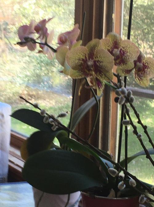 blog april 2020 orchids
